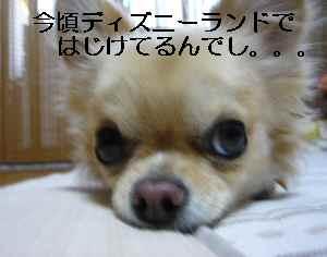 blog2009111904.jpg