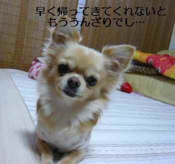 blog2009111905.jpg