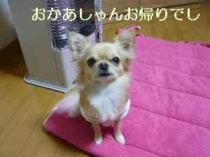 blog2009112301.jpg