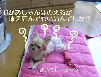 blog2009112601.jpg