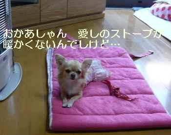 blog2009112602.jpg