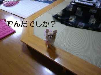 blog2009112701.jpg