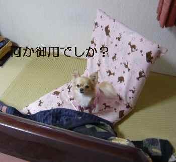 blog2009112702.jpg