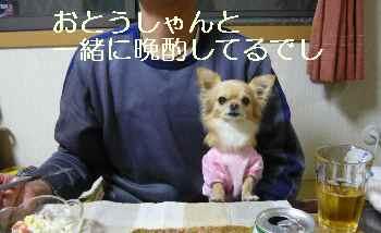 blog2009112703.jpg