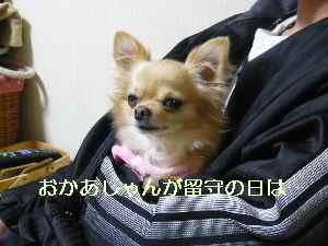 blog2009112802.jpg
