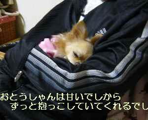 blog2009112803.jpg