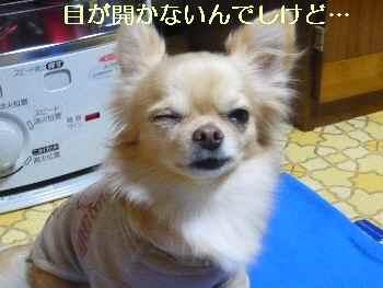 blog2009112904.jpg