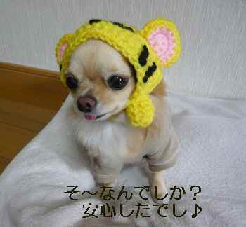 blog200911302.jpg