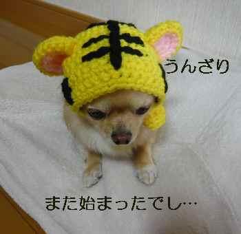 blog200911303.jpg