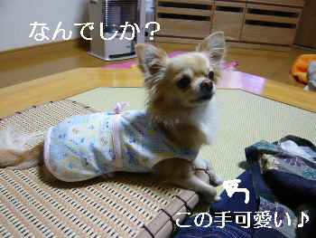 blog2009120202.jpg