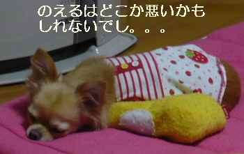 blog2009120505.jpg