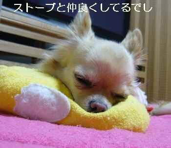 blog2009120702.jpg