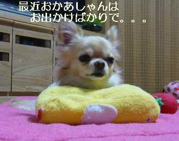 blog2009120703.jpg