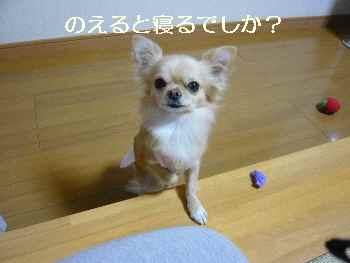 blog2009121002.jpg