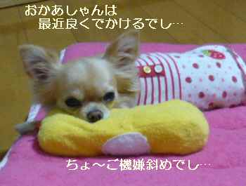 blog2009121306.jpg