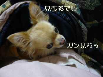 blog2009121602.jpg