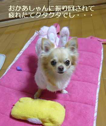 blog2009121704.jpg