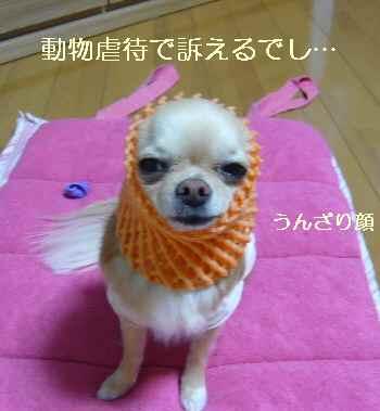 blog2009121903.jpg