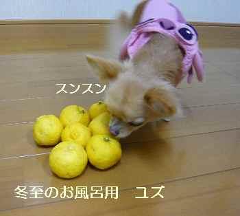 blog2009122102.jpg