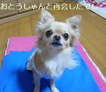blog2009122301.jpg