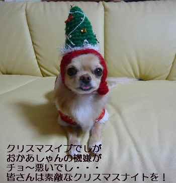 blog20091224.jpg