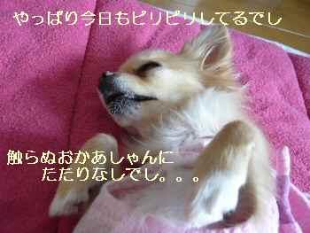 blog2009122601.jpg
