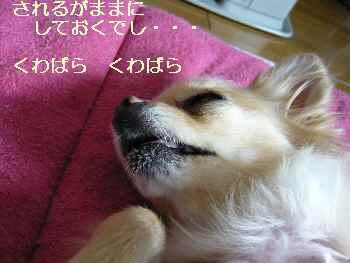 blog2009122602.jpg
