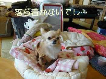 blog2009122902.jpg