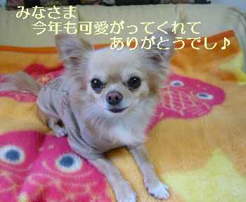 blog2009123103.jpg