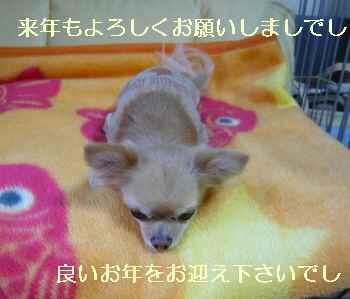blog2009123104.jpg
