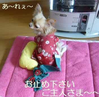blog2010010401.jpg