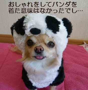 Noel Panda