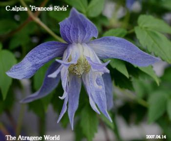 Frances Rivis A2