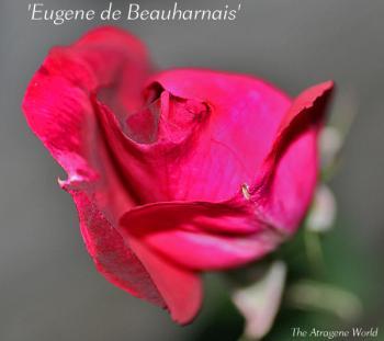 Eugenedebeauharnais2711200901.jpg