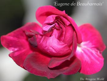Eugenedebeauharnais2811200901.jpg