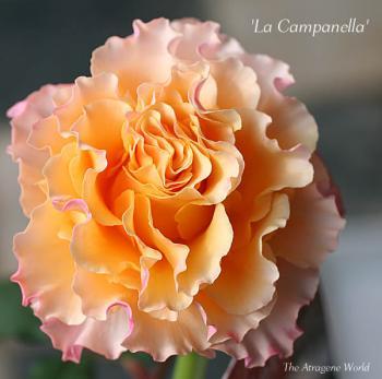 LaCampanella0711200901.jpg