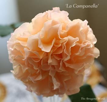 LaCampanella0711200902.jpg