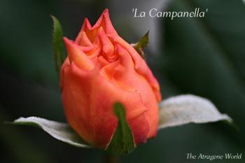 LaCampanella2410200901.jpg