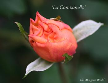 LaCampanella2410200902.jpg