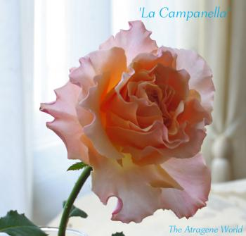 LaCampanella3010200902.jpg