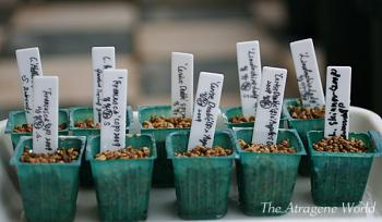 germinationandtransplantingAT1711200901.jpg