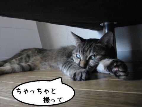 IMG_0962.jpg