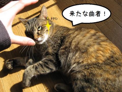 IMG_1520.jpg