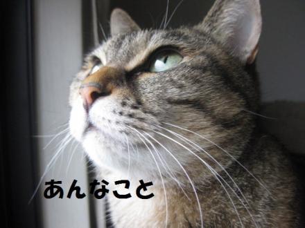 IMG_5259.jpg