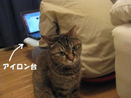 IMG_5487.jpg