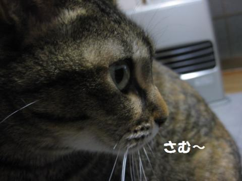 IMG_5805.jpg