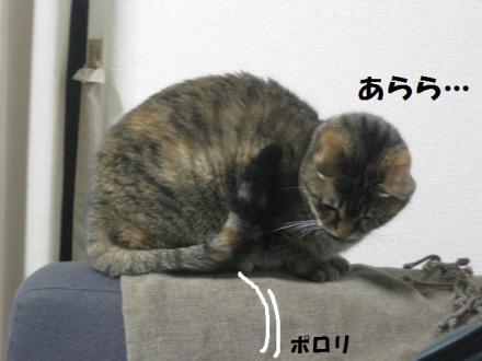 IMG_5814.jpg