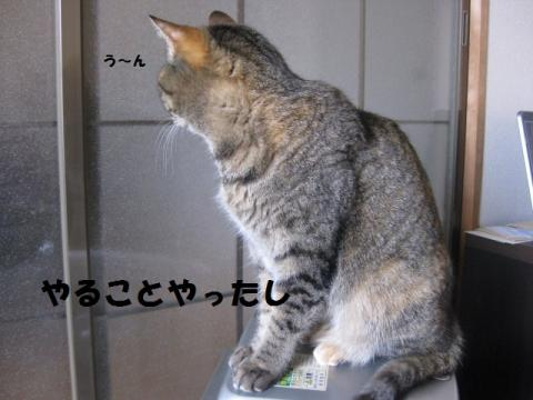 IMG_5944.jpg