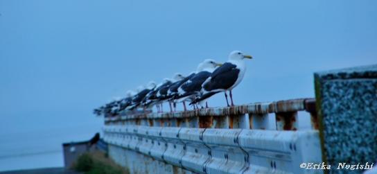 海鳥の放列