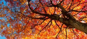 home-autumn.jpg